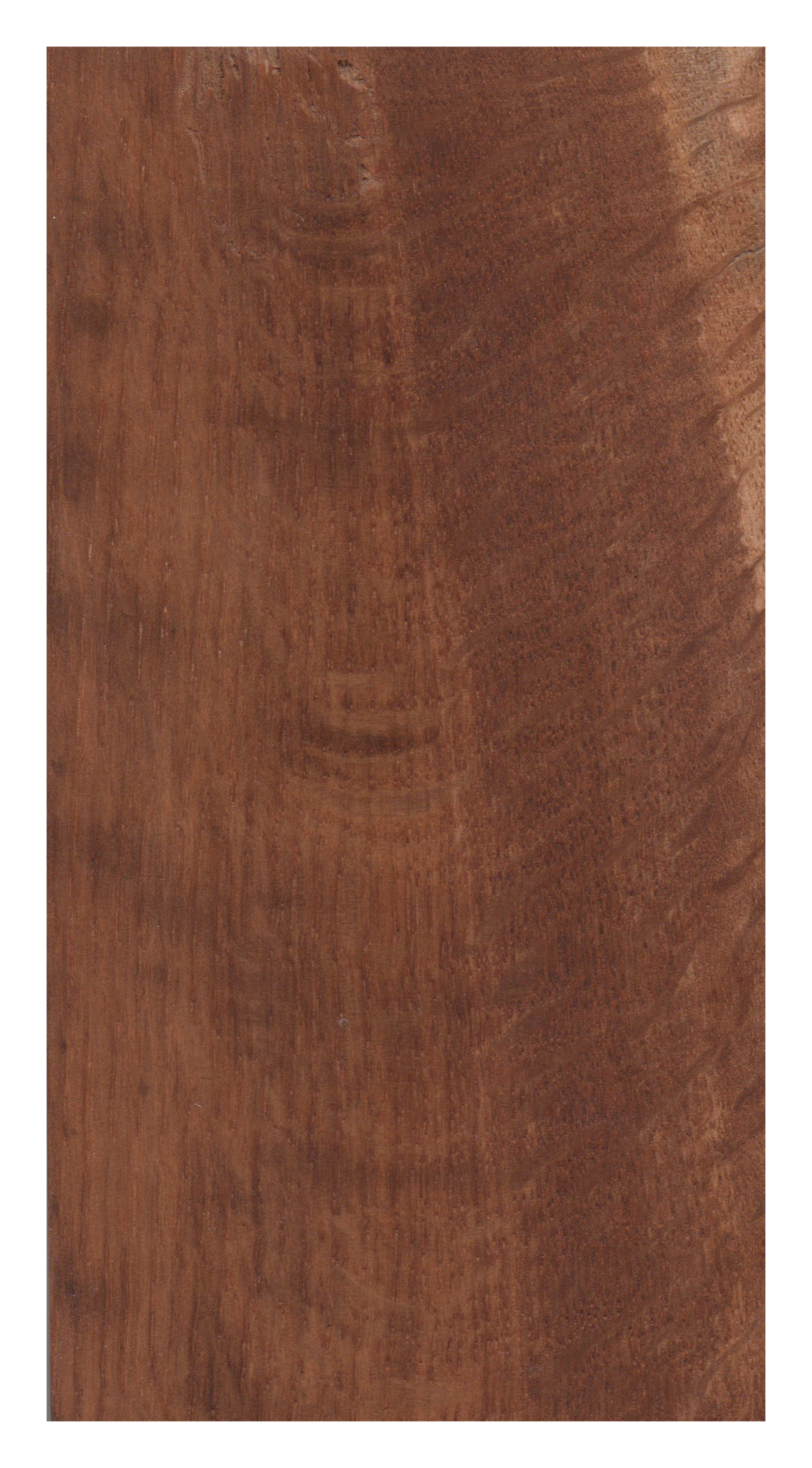 Brown oak