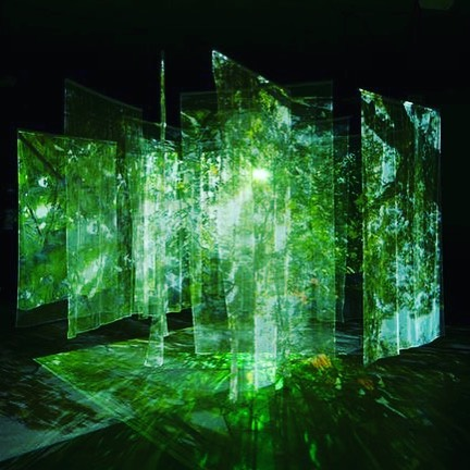 Natural Projection 🌿 #sauceofnature #inspiration #projection