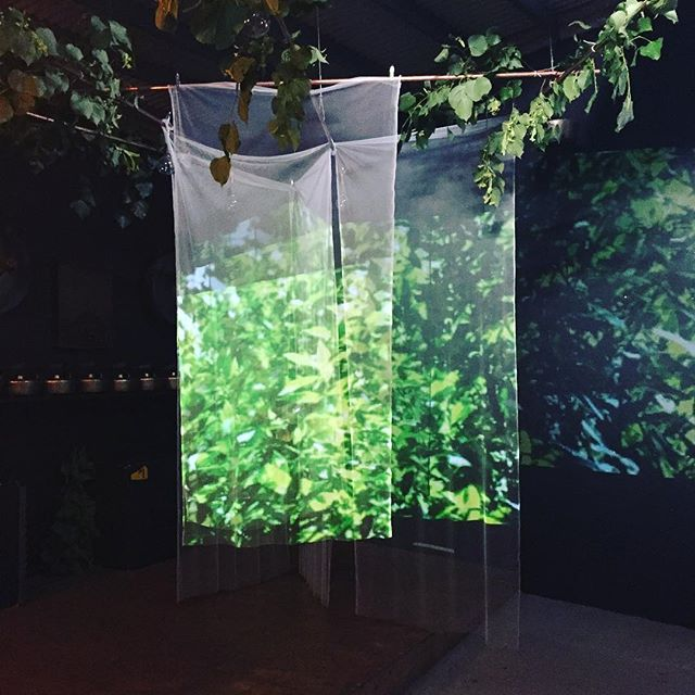We're looking forward to welcoming you tonight! #sauceofnature #nature #digitalinstallation #jointheforce 🌱🌿🍃@Limewharf @tamvibe @slvmnwll