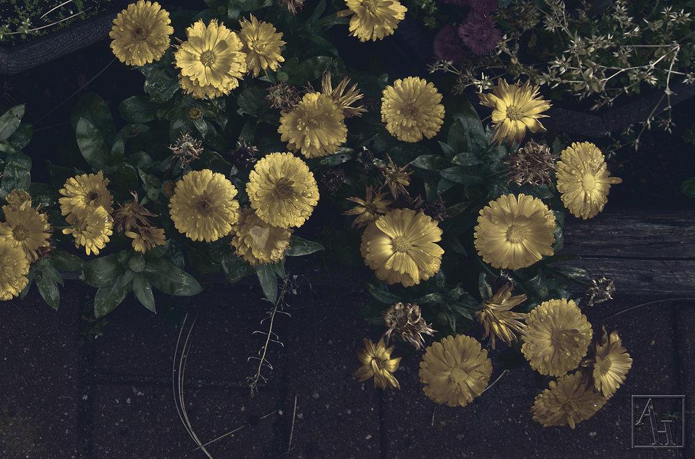 garden flowers copy.jpg