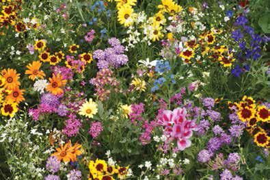 Hummingbird U0026 Butterfly Garden