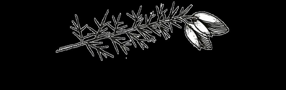 WGS logo.png