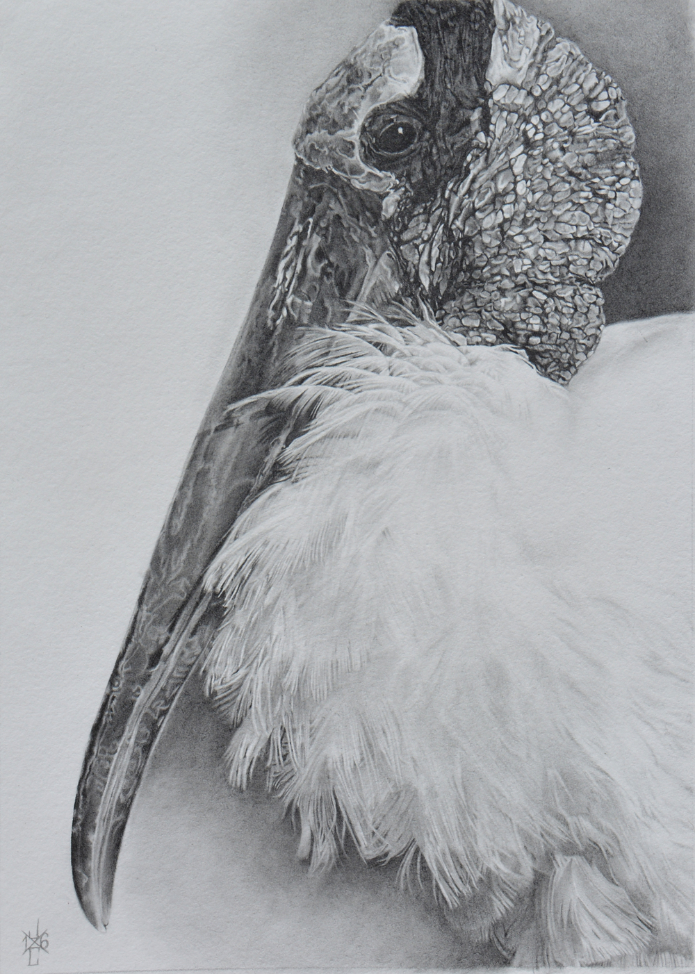 Wood Stork #1