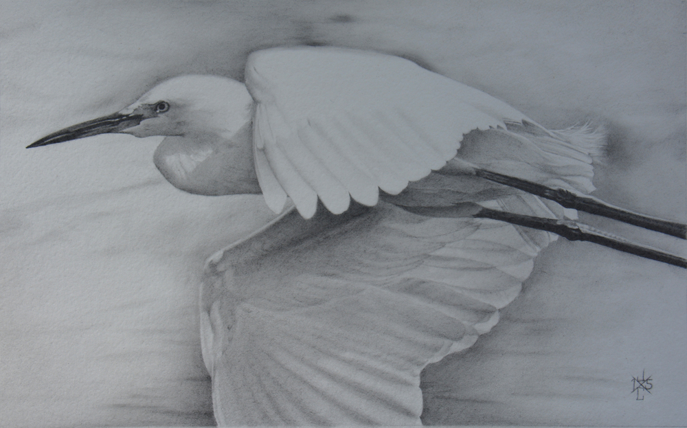 Snowy Egret #1