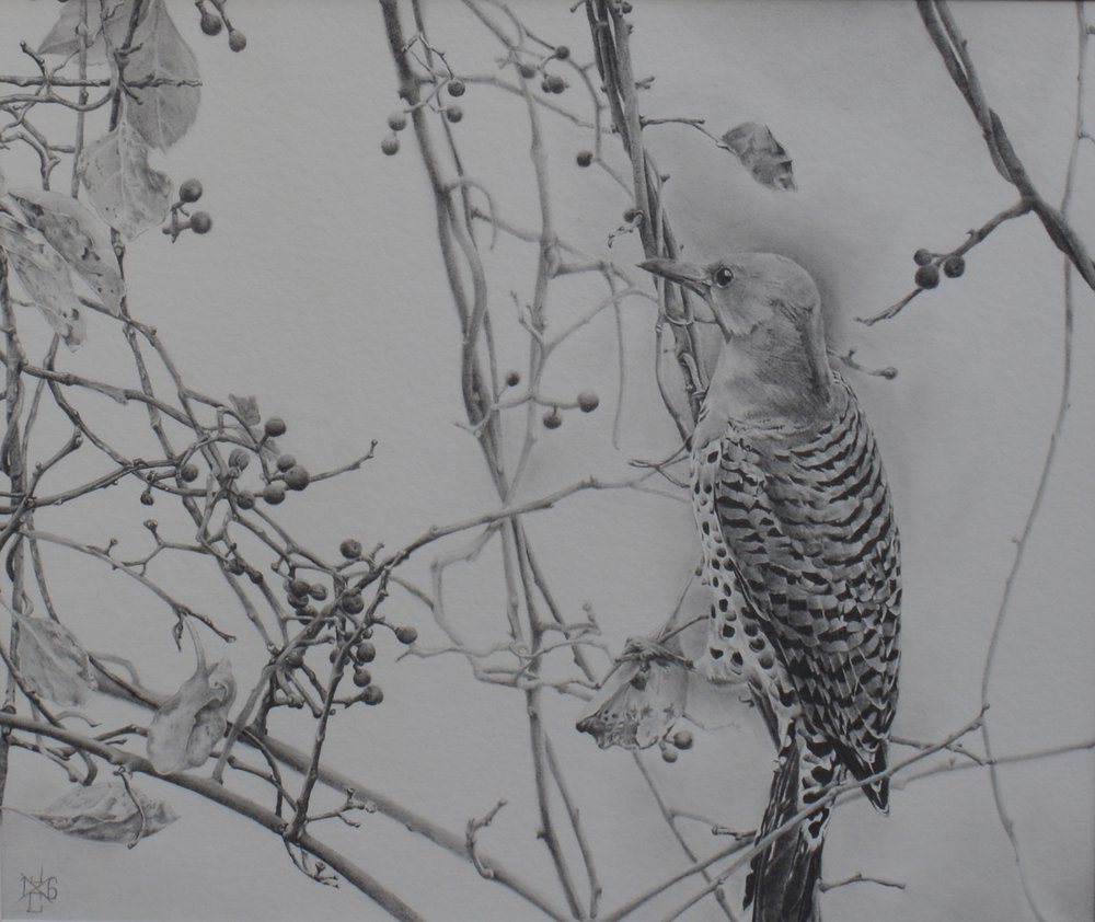 Northern Flicker #1