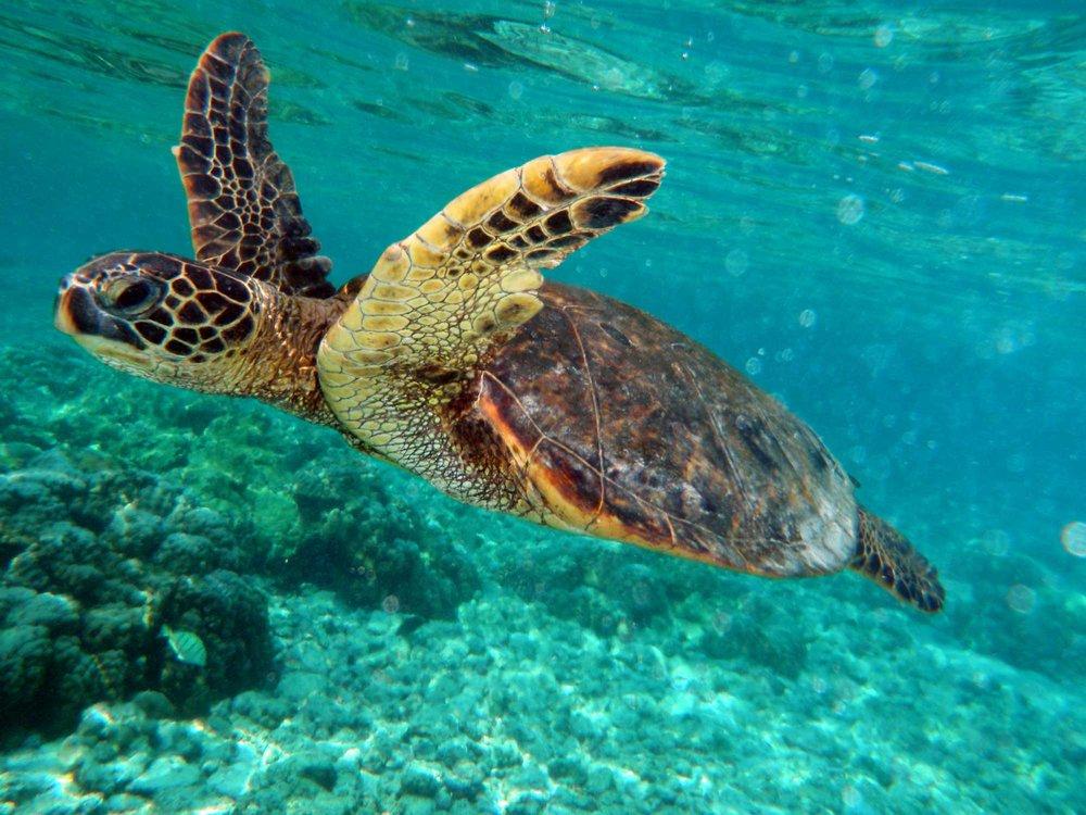5. Virgin Islands National Park