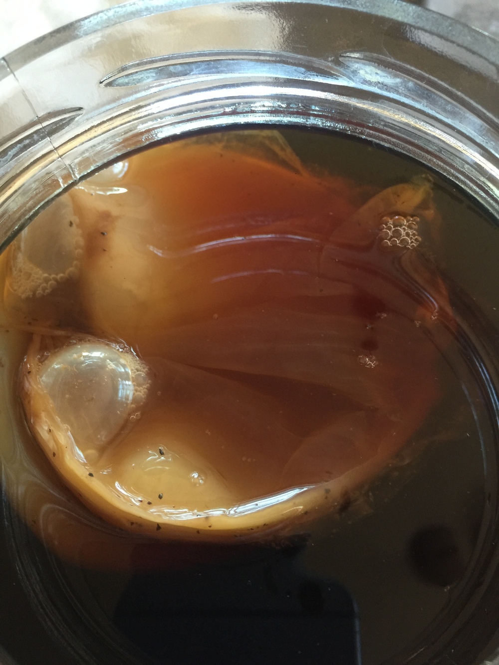 Here is my SCOBY floating at the top of the brew.  It's fine if it floats, or it may sink to the bottom.  It's all good.  As long as you see bubbles in a few days, you're fine! Over the next few days, you will notice your SCOBY floating to the top!  That's a great sign!