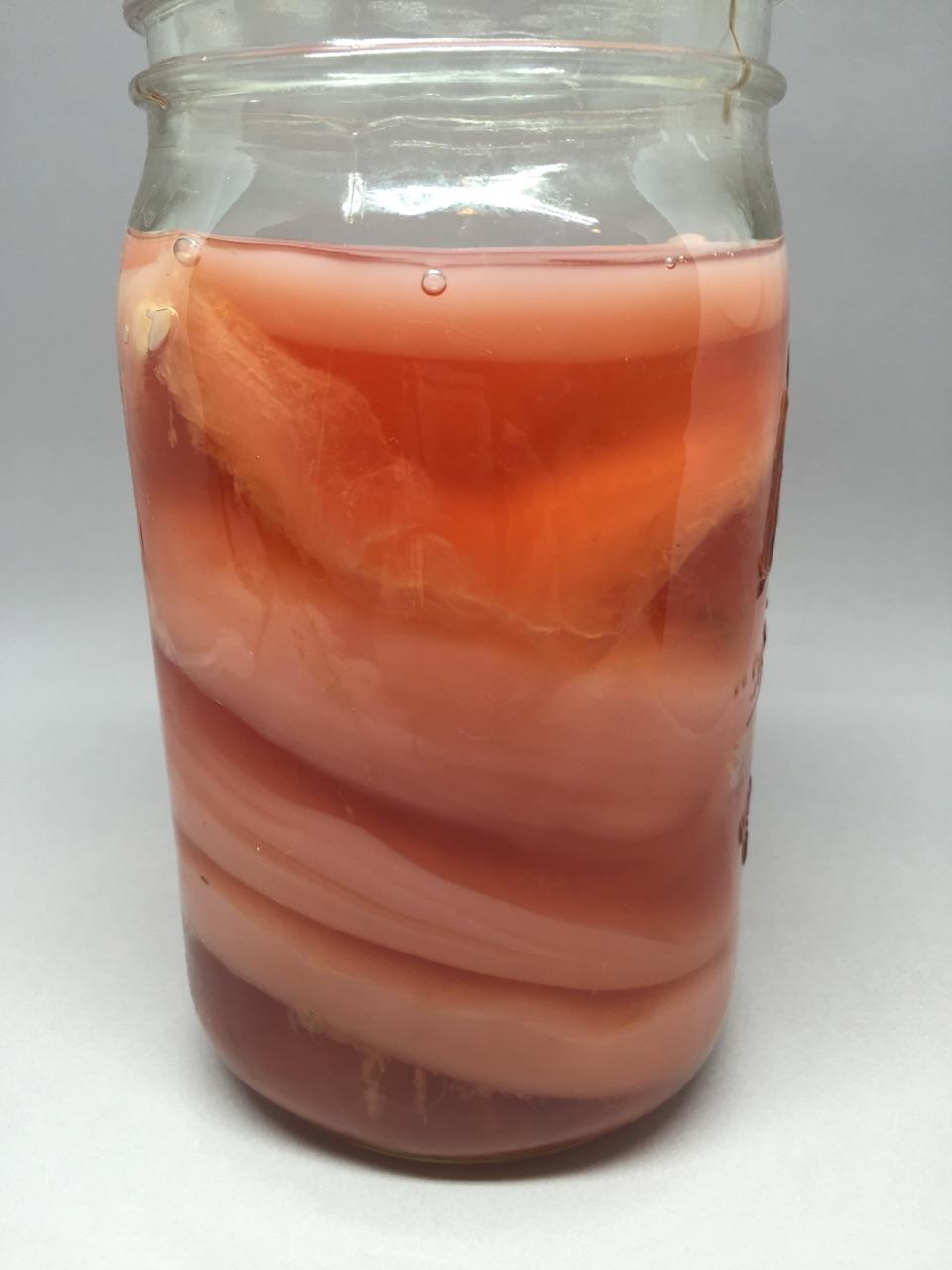 "A SCOBY ""Hotel"""