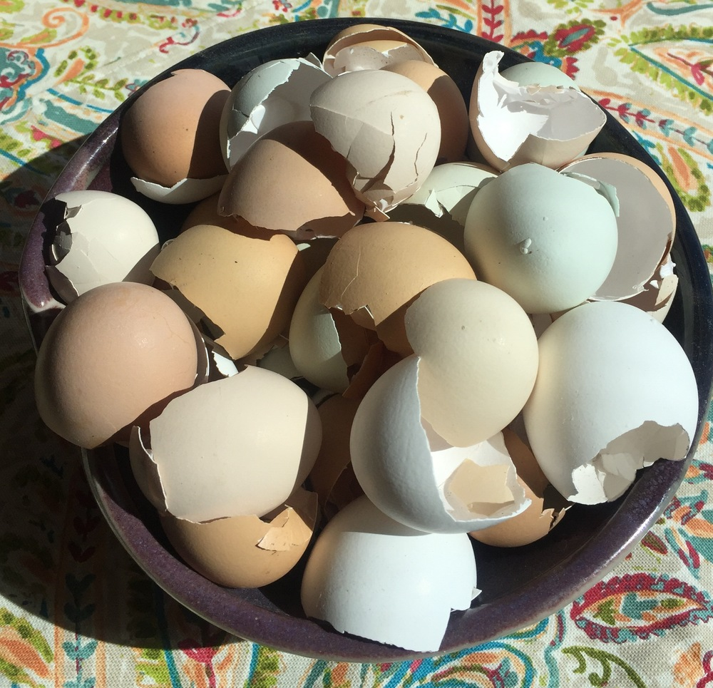 Here are some eggshells from the ladies I've been saving.  Keep reading to learn how to make your own Calcium powder!  It's better and less expensive than the Calcium Supplements you buy in the stores!