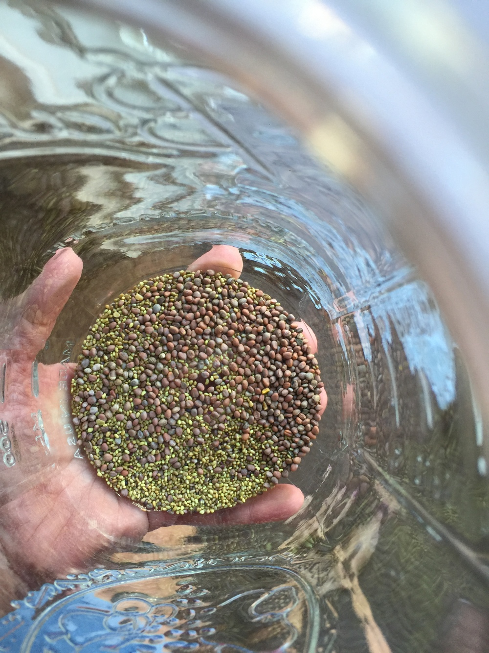 Birds' eye view of the sprout blend!  Start with fewer seeds until you get an idea of how the seeds sprout and how large they will get.  They are all slightly different.  It doesn't look like much now, but you will end up with a jar FULL of beautiful green sprouts!