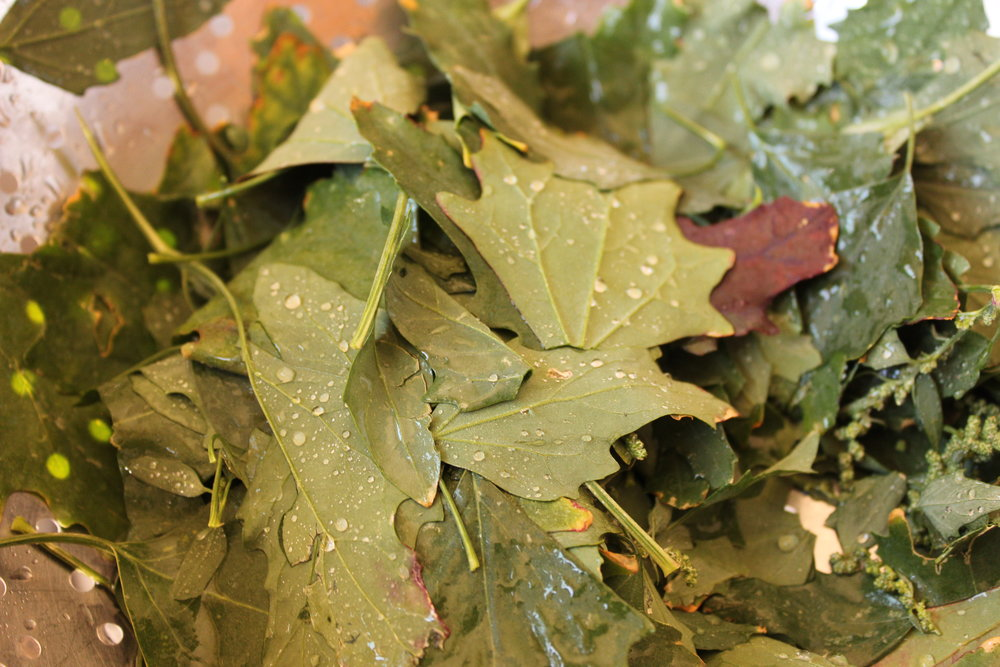 Rinse the leaves well.  You'll need a lot because they steam down to a very small amount, just like spinach.  See how the water beads up on the backs of the leaves?  Another sign of lambsquarters.  The leaves are very soft and powdery, especially on the back, and this causes the water to just drain right off!