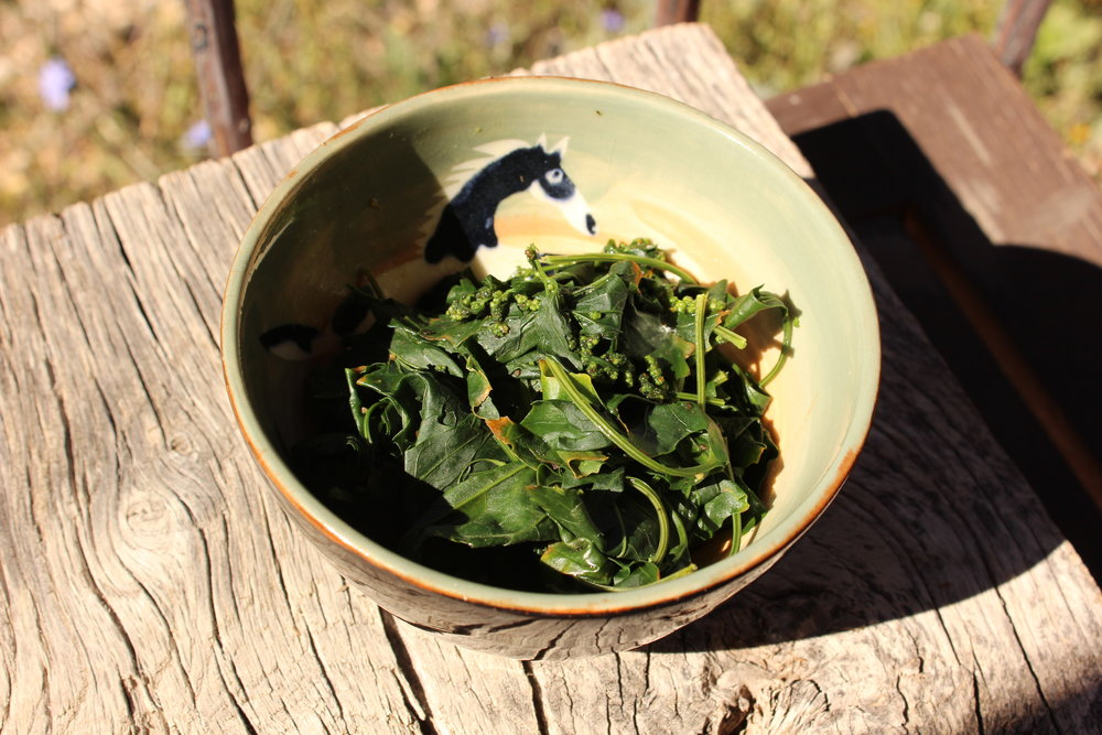 Here's my little bowl of steamed lambsquarters.  I added some olive oil and balsamic vinegar.  I'm sure you could add feta cheese & some garlic too, if you like!  It's truly delicious!
