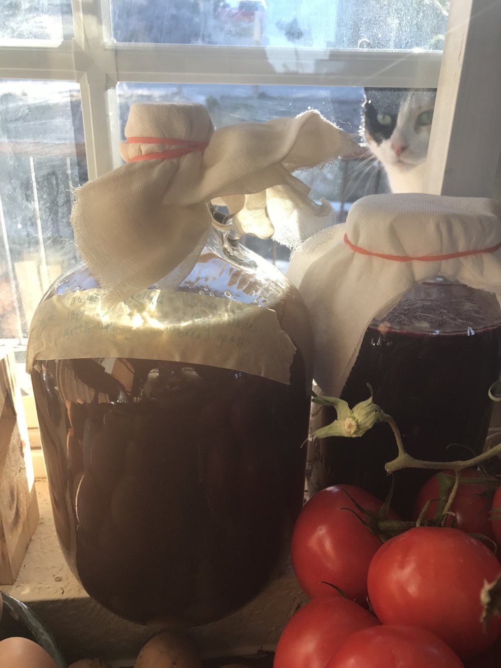 Here it is, sitting in the window sill, along with some beet kvass, tomatoes, & eggs.  My cat, Harriet, is wondering what on earth I am doing now! :-)