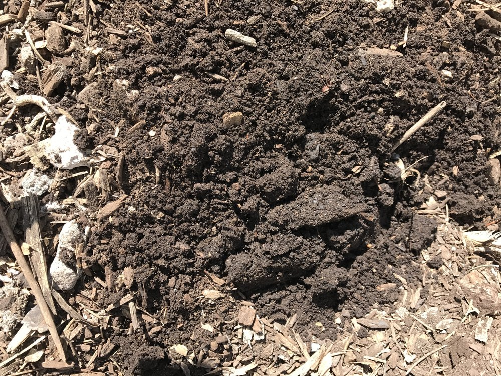 This is what the soil looks like in the North garden now. I just turned some of it up so you can see. I know other places have really rich, dark soil, but I am REALLY proud of this soil and how much it has improved in three years! I actually got the ultimate compliment from my Dad on our soil last year!