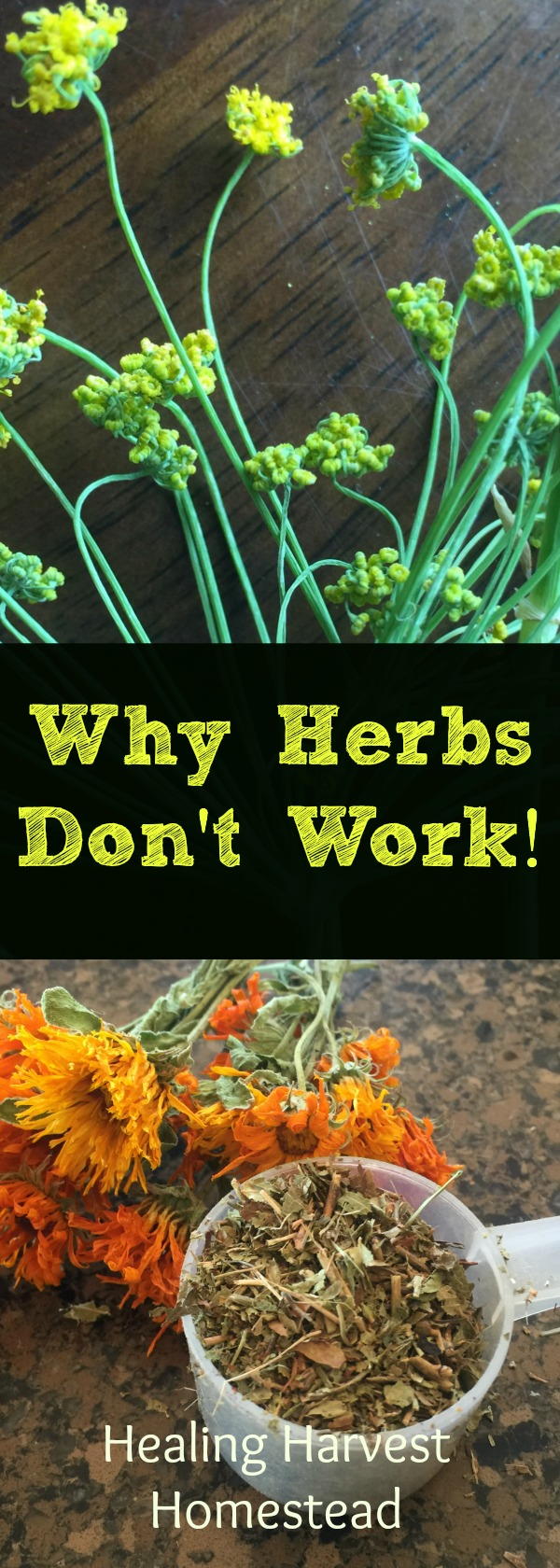 If you have ever wondered why herbal remedies aren't working for you, here are some potential reasons to consider.