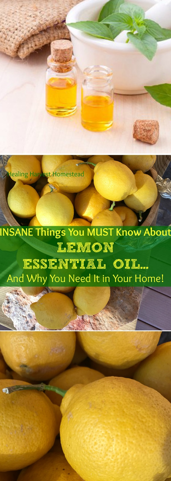 Lemon Essential Oil smells happy and just plain wonderful. But besides the many aromatherapy benefits, it has multitudes of additional uses! It's also a relatively inexpensive essential oil. Find out why you need it in your home!