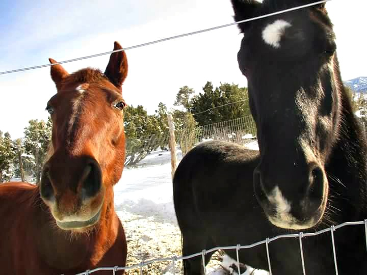 Here are Ginger and Buddy. All my life, since I was 18 and went off to college, leaving my (our family) horses behind, I wanted to grow up and have my own horses to ride. In a great place to ride. I put my mind, prayers, and heart to it:  See?