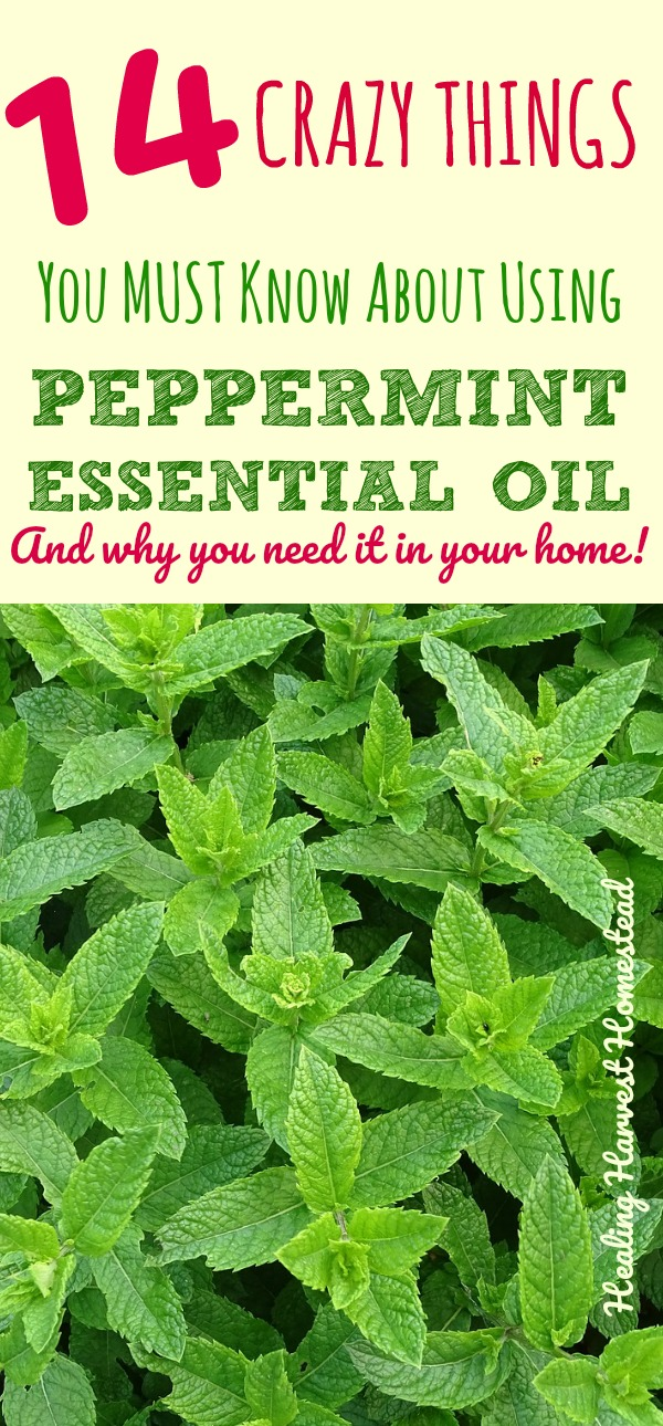 Everyone loves peppermint! And the essential oil is not only wonderful to smell, but it has some pretty amazing health benefits too. Find out how to use peppermint essential oil, what it's good for, and how to use it! You really need to keep peppermint essential oil in your home, and here's why!