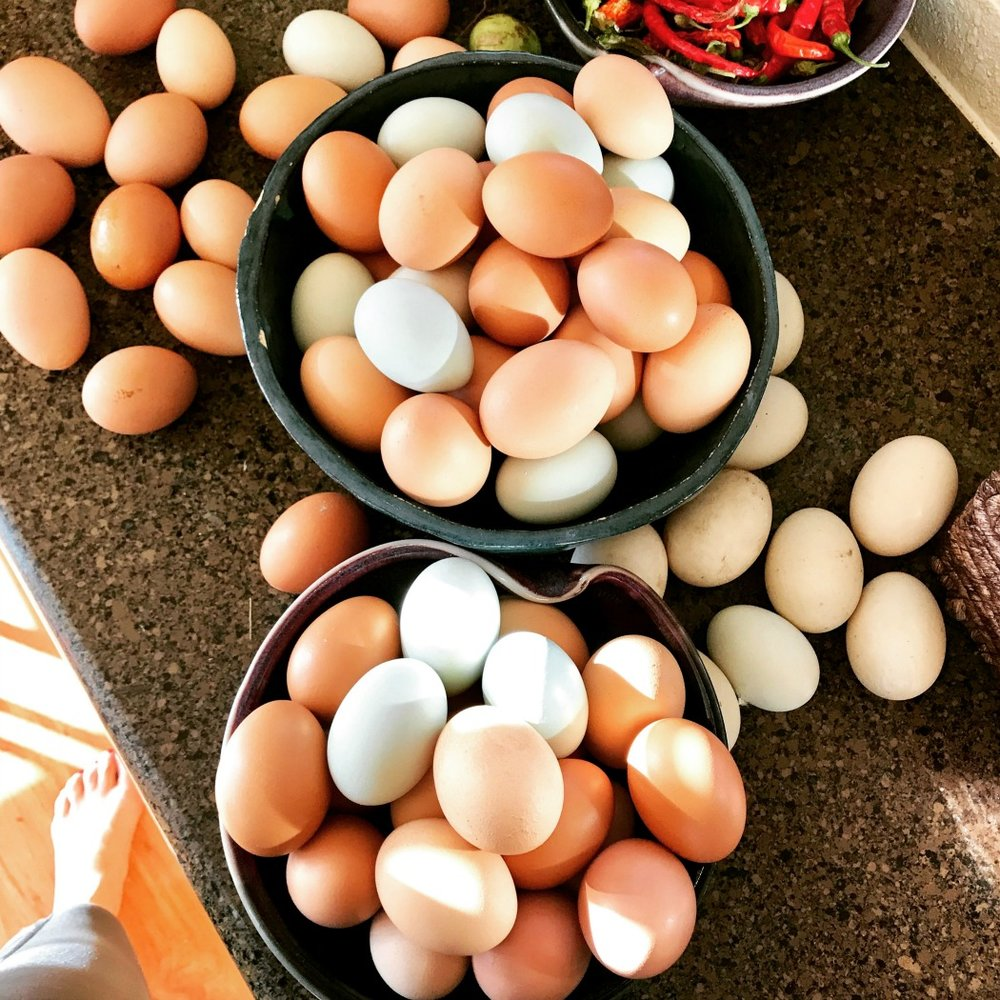 "Oh my gosh. Last summer, we had a huge excess of eggs. Duck eggs. Chicken eggs. Turkey eggs. And I didn't have time to do things with all of them! Many of these got the ""Float Test."""