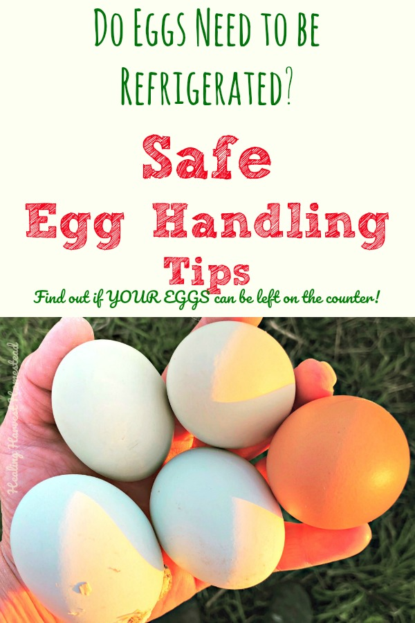 Do eggs really have to be put in the refrigerator? It all depends. Find out when you need to wash your eggs, when to refrigerate eggs, and when you should get rid of them. Also--find out why people in Europe and other countries don't put their eggs in a cooler or fridge. Here is how to handle your eggs so they are safe to eat!