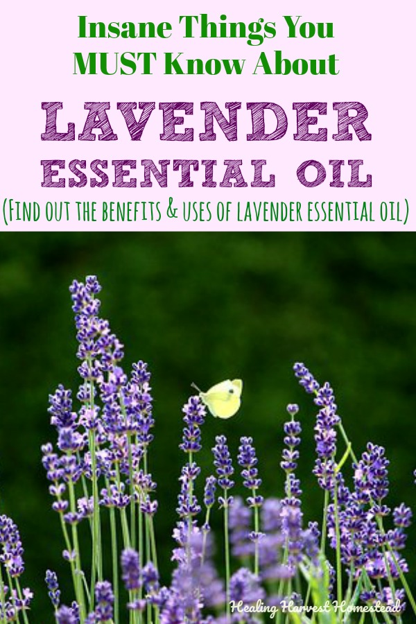 Lavender essential oil has become one of my favorites for so many reasons. Find out how to use lavender essential oil and its benefits for your home and family. I've included a couple of easy recipes for how to make a lavender roll-on and a spray too! Perfect for back to school! #lavender #lavenderrollon #essentialoil #essentialoilhandspray #lavenderspray #antibacterial #backtoschool #essentialoilsbacktoschool #purple