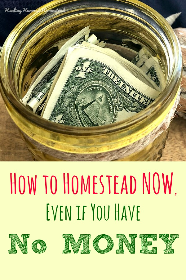 Do you dream of being a homesteader some day? Well, wait no longer! Even if you have very little money, you can start your homestead dream right now by doing a few simple easy things. Don't wait to start homesteading! You can become a homesteader now. Get your homestead skills going! #homestead #frugal #nomoney #homesteadlife #homesteading #startnow #howto #startahomestead