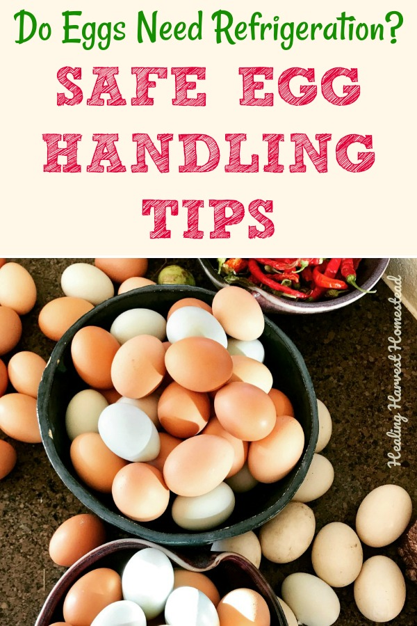 Can you keep your eggs on the counter? Well, the answer is yes. And no. It depends on several factors. Find out how to keep your eggs so they are safe for your family to eat! Have you ever wondered how long eggs actually are good for? Here you go! Click through to find out all your answers! #eggs #safeeggs #refrigeration #refrigerated #homestead #chickens #howtokeepeggs #homesteadskills