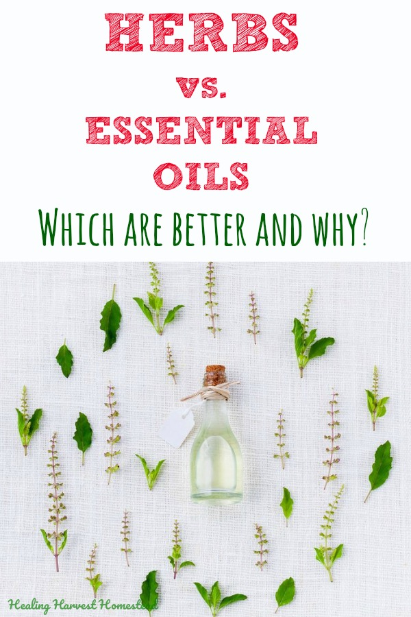 Have you ever wondered if herbs are better than essential oils? Or vice versa? I have been using both herbs and essential oils for many years now, so I have the answer! Click here to find out the positives and negatives & the benefits and the downsides of both. PLUS which is best to use! #herbs #essentialoils #best #better #downsides #benefits #howtouseherbs #howtouseessentialoils #herbsandessentialoils #apothecary #beginners #howtouse #essentialoils #herbs #remedy #cure #blend