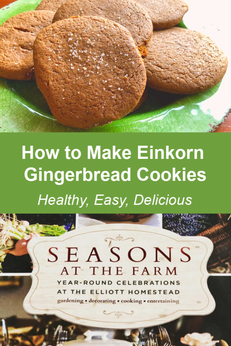 This gingerbread cookie recipe made with einkorn flour is delicious, healthy, easy, and great for the cold winter months! It's a healthy snack your kids will love! #gingerbread #cookierecipe #einkorn #flour #healingharvesthomestead