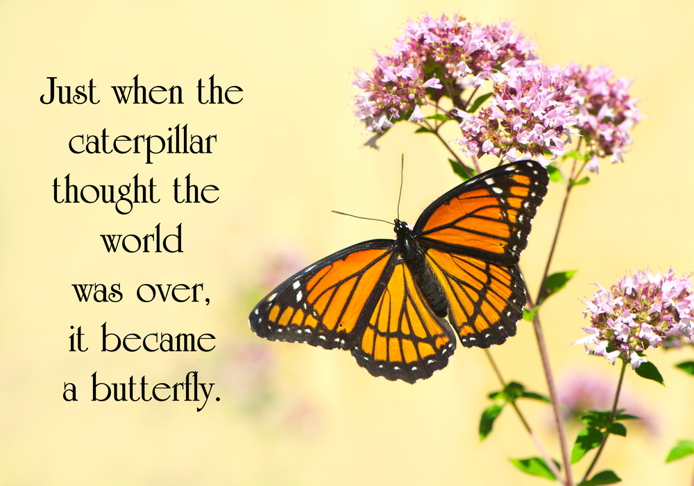 Pic Inspiring Quote Butterfly.jpg