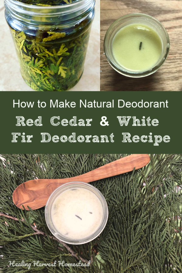 Here's a low baking soda deodorant recipe you'll love! It's all natural and infused with cedar and white fir for extra deodorant powers! Make your own handmade deodorant and avoid the nasty chemicals in the store-bought stuff! And you'll smell divine! #deodorant #recipe #handmade #natural #lowbakingsoda #healingharvesthomestead #cedar