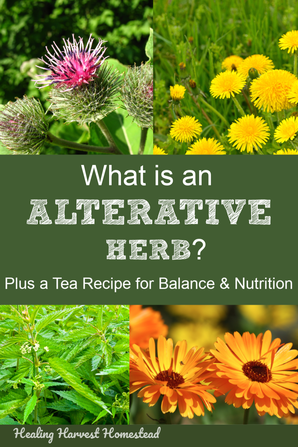 Find out what an alterative herb is, why you need to add these to your daily diet, plus an herbal tea recipe for balance, nutrition, and metabolic support. Be heatlhy, and use herbs! #herbaltea #useherbs #alterativeherbs #homeremedy #plantmedicine #howtomake #nutrition #tea #metabolism #health #healingharvesthomestead