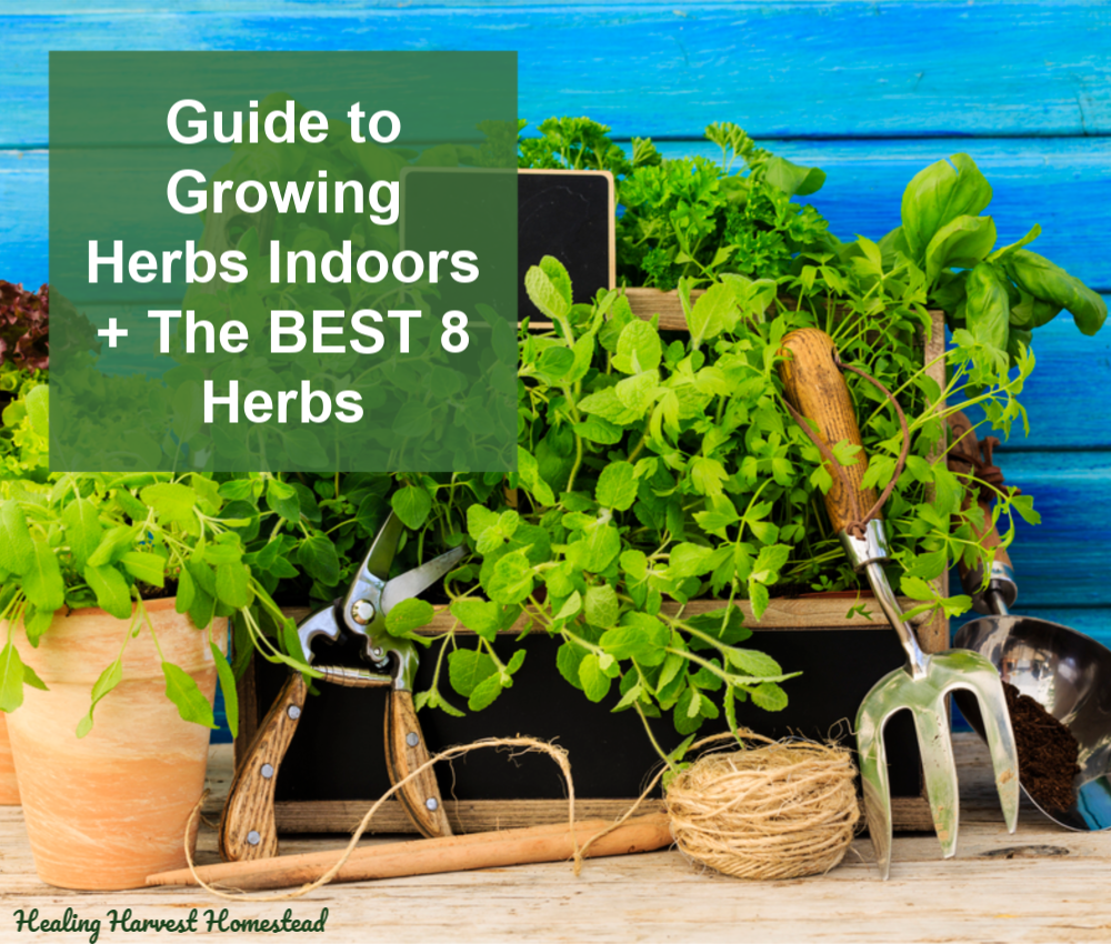 The Ultimate Guide To Growing Herbs Indoors All Year Long Plus