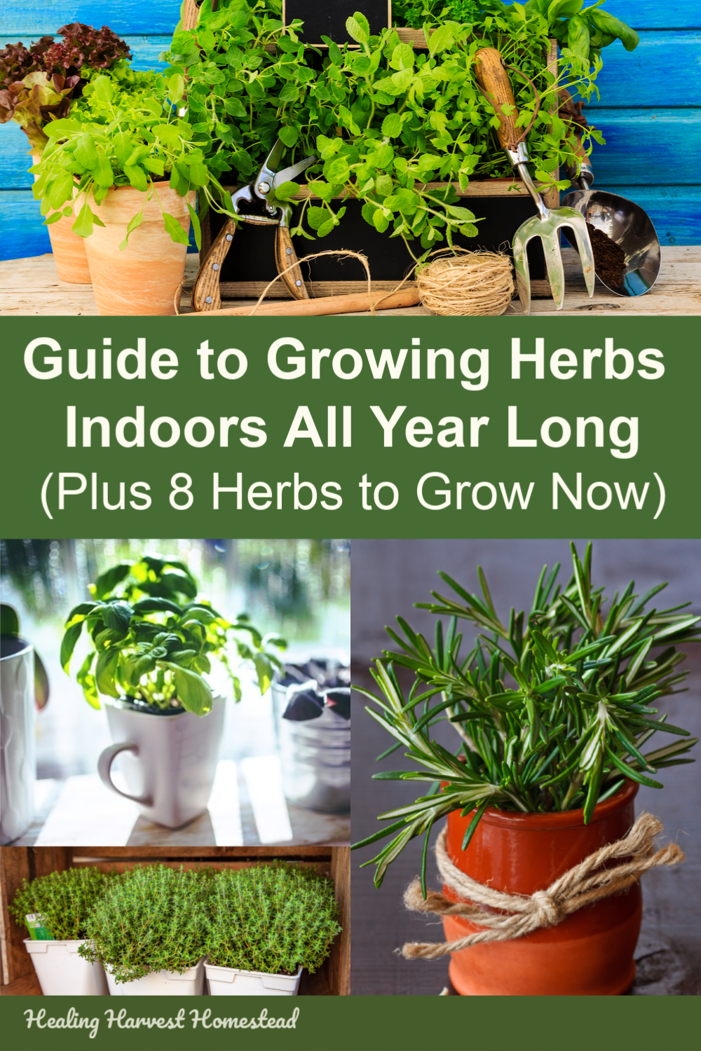 Find out how you can grow herbs indoors all year long! Have you ever wanted to snip fresh herbs for your cooking in the middle of the winter? Here is a guide and tips for indoor herb gardening, along with the BEST 8 herbs to grow inside your home. #growherbs #howto #garden #indoors #tipsforgrowing #healingharvesthomestead #indoor #gardening