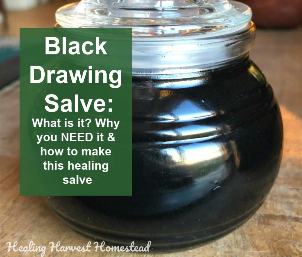 Herbal Black Drawing Salve Recipe That WORKS! (The How, Why