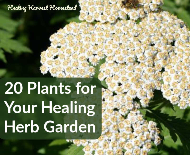 20 Medicinal Herbs To Grow (Make Your Own Herbal Remedies With Plants You  Grow!