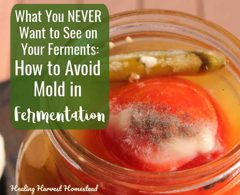 "What You DON""T Want to See on Your Ferments! A Bit About Mold....And How to  Prevent! — Home Healing Harvest Homestead"