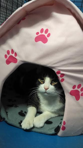 """Many of them love sleeping or hiding in these little """"cat tents"""" that were donated!"""
