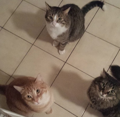 From left: Cartney (the ginger), Lenny (white & grey), and Ringa.