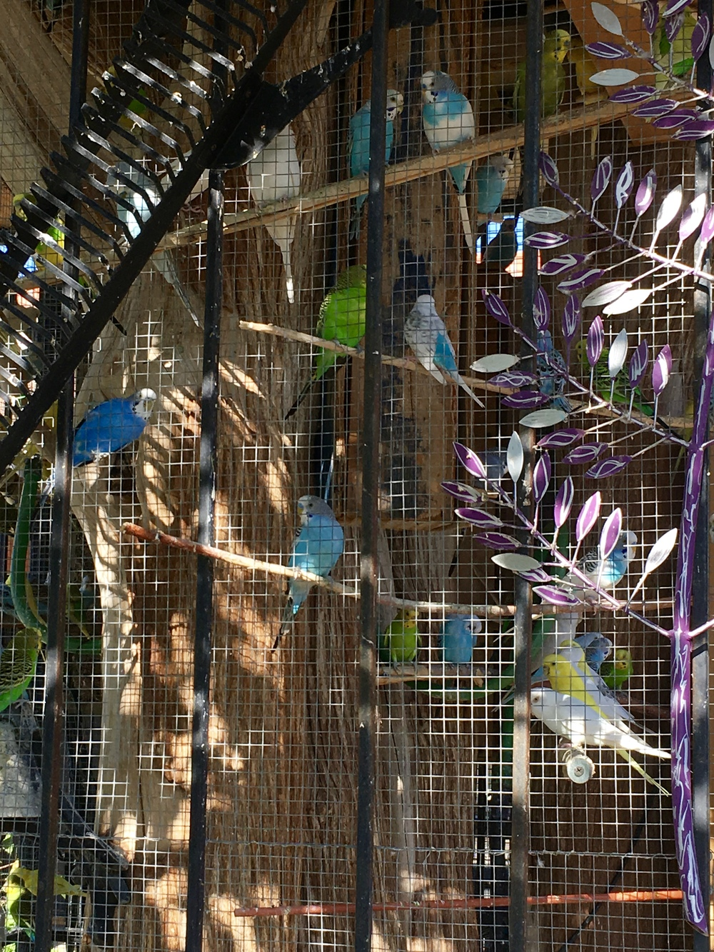 This is one of several outdoor aviaries at a house in Dunbar Spring.
