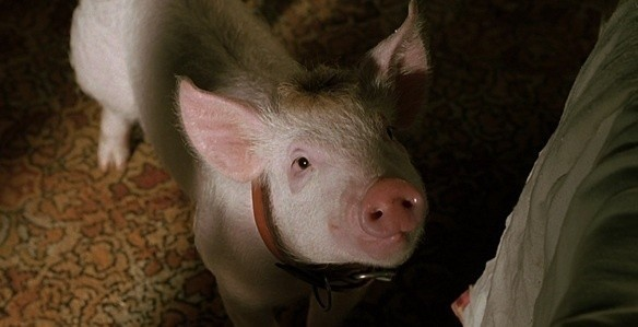 4162_1_babe_pig_in_the_city_1998_blu_ray_movie_review_full.jpg