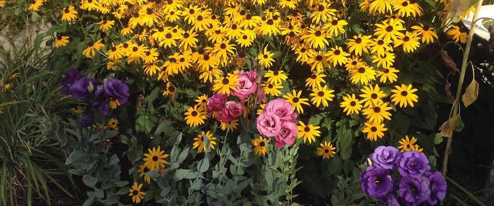sunflowersgarden.jpg