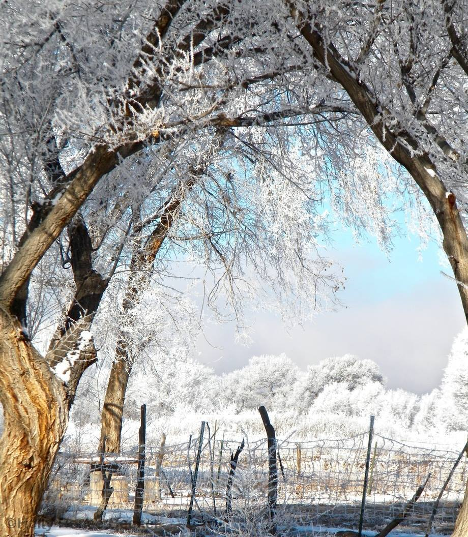 Heavy Frost in Tome, NM December 31, 2015 By Holly Renee Becker