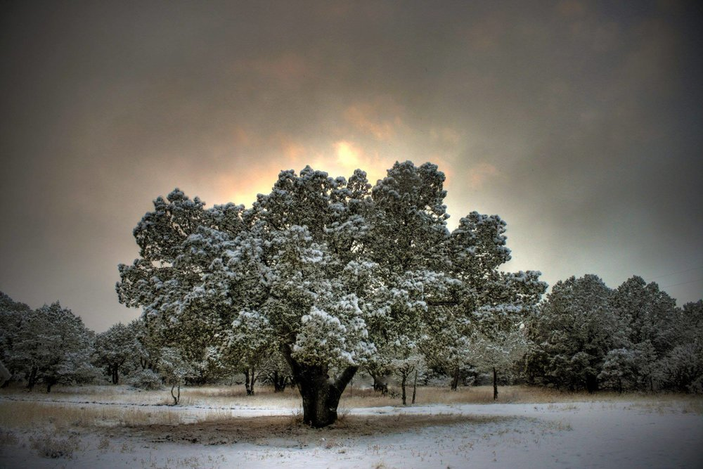 Nogal, New Mexico Photo by Corey Walker