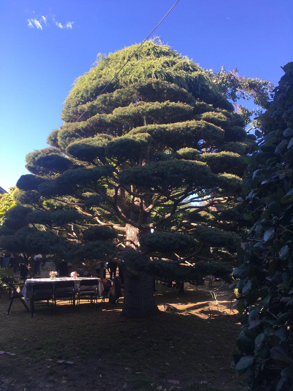 Tree @ Joanne.jpg