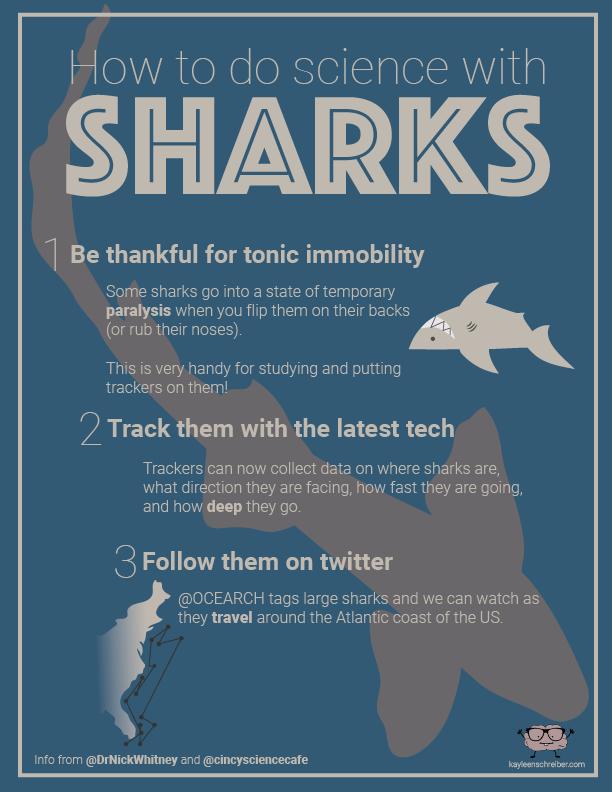 SharkWeekGuy-01.png