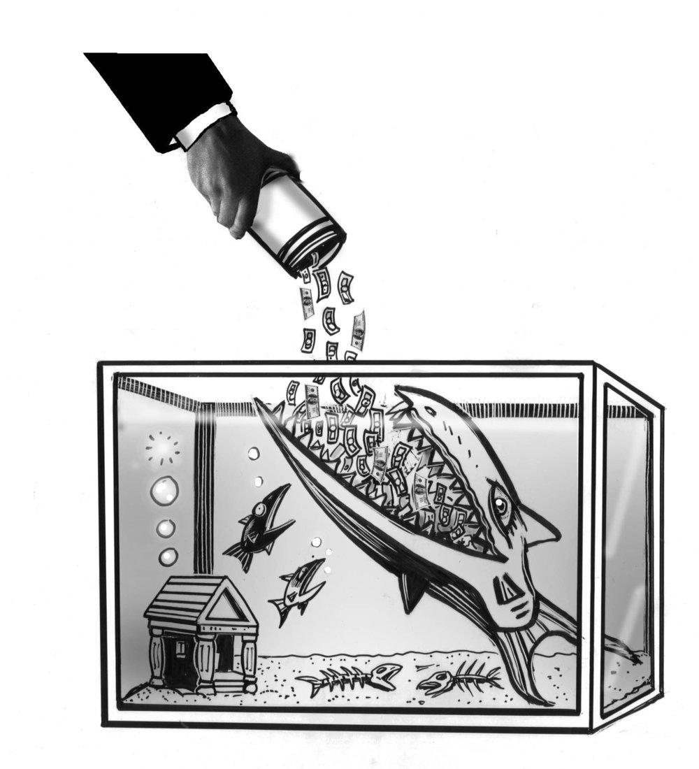 BankFish_K.jpg