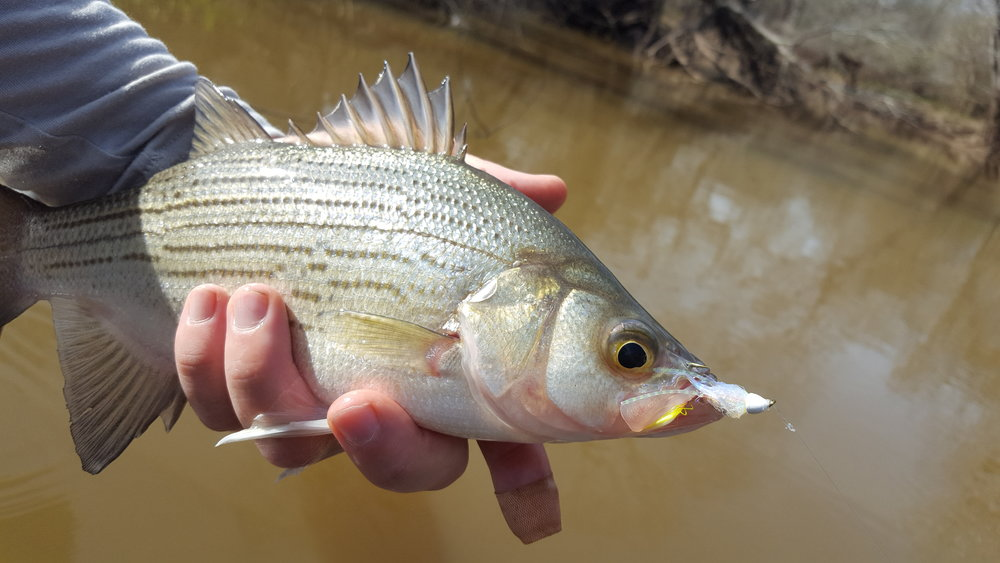 Journal — Houston Fly Fishing Guide Services