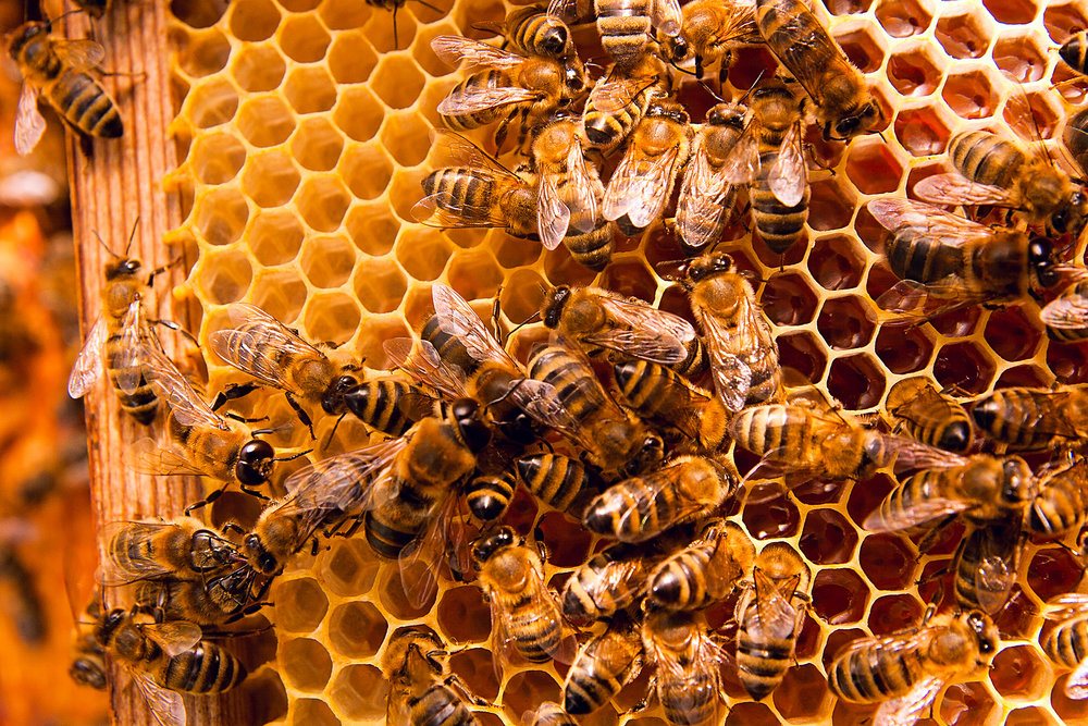 Working Bees - Bee Venom Therapy