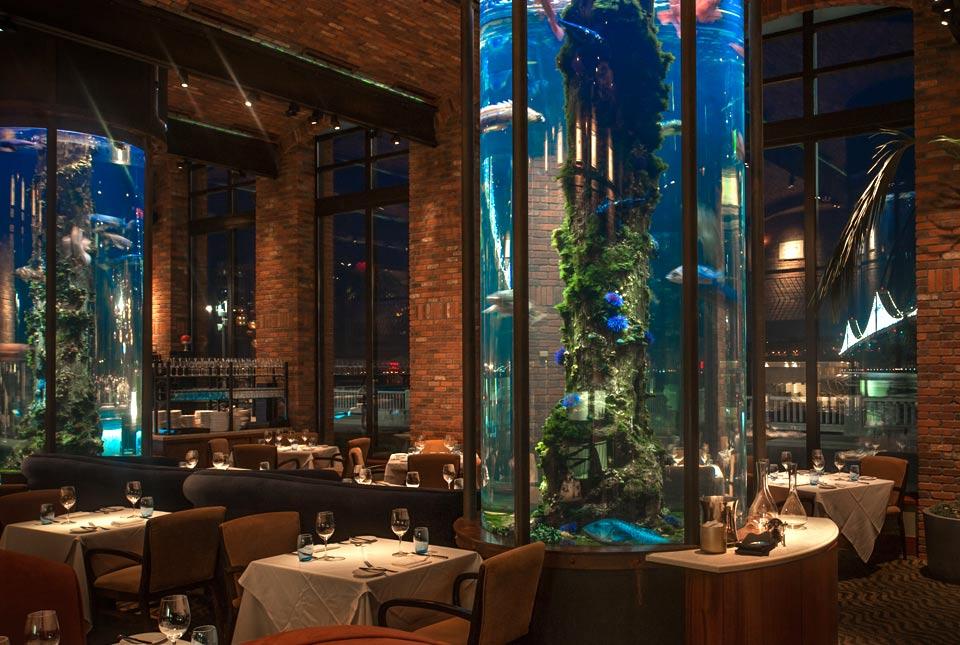 photos_waterbar_aquarium2.jpg